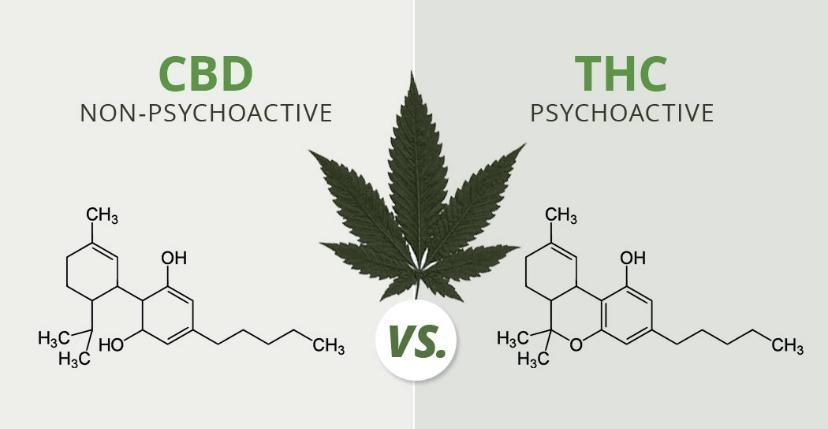What is the Difference Between THC and CBD? | HBE CAN INC