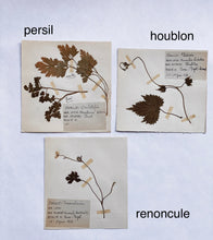 Load image into Gallery viewer, 1930s French botanical samples