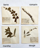 small vintage French botanical samples