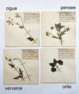 1930s French botanical samples