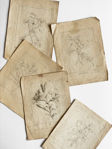 antique French botanical engravings