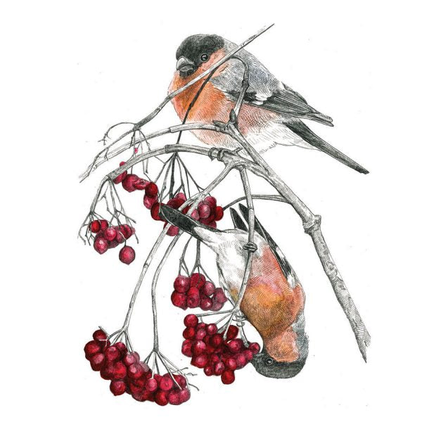 BULLFINCHES AND RED BERRIES