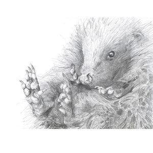 CURLED UP HEDGEHOG PRINT by Hannah Longmuir