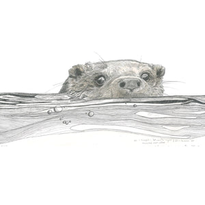 OTTER IN WATER PRINT by Hannah Longmuir