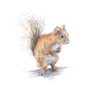 RED SQUIRREL PRINT by Hannah Longmuir