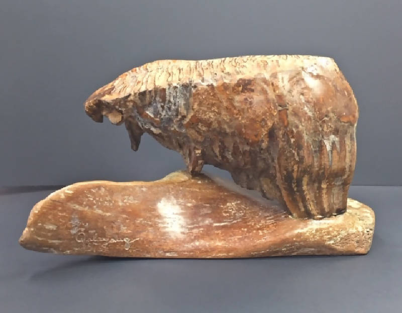 Woolly Mammoth Tooth - LARGE Adult