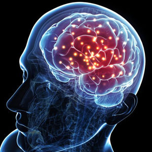 Nootropic properties of Shilajit may help improve memory and brain health.