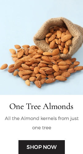 Almond kernels collected from a single tree