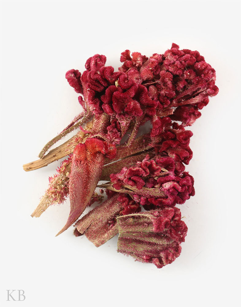Dried Cockscomb Flower (Mawal)