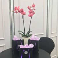 Orchids and small paper carrier bags at Windsor horse show