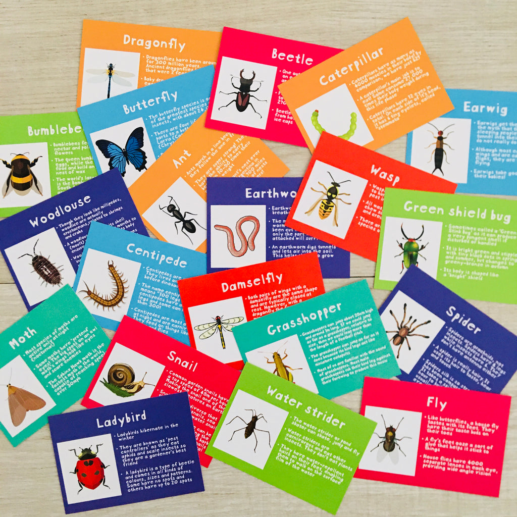 Bug fact cards x 20