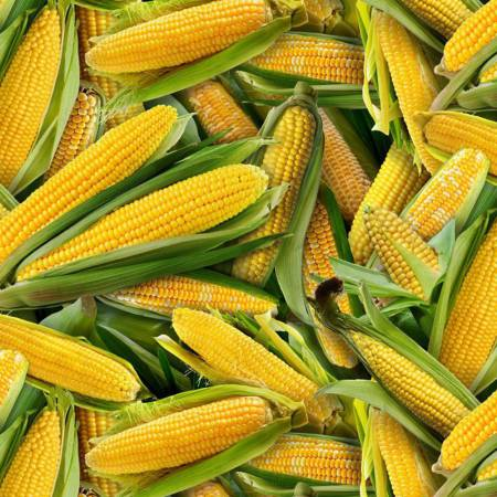 Corn on the Cob - Yellow