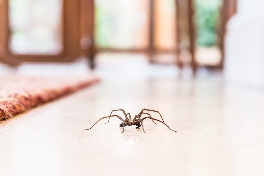 Treating Your Home to Make It More Comfortable For Spider Freaks