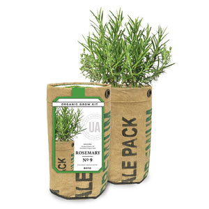 Organic Rosemary Grow Kit