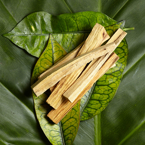 """Holy Wood"": The History and Benefits of Palo Santo"