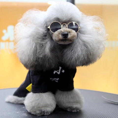Image of Dog Sunglasses