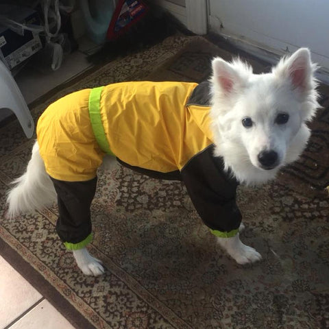 Image of Coast FX Waterproof Dog Safety Raincoat