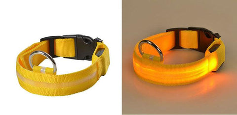 CoastFX Flashing Glow In The Dark Dog Collar