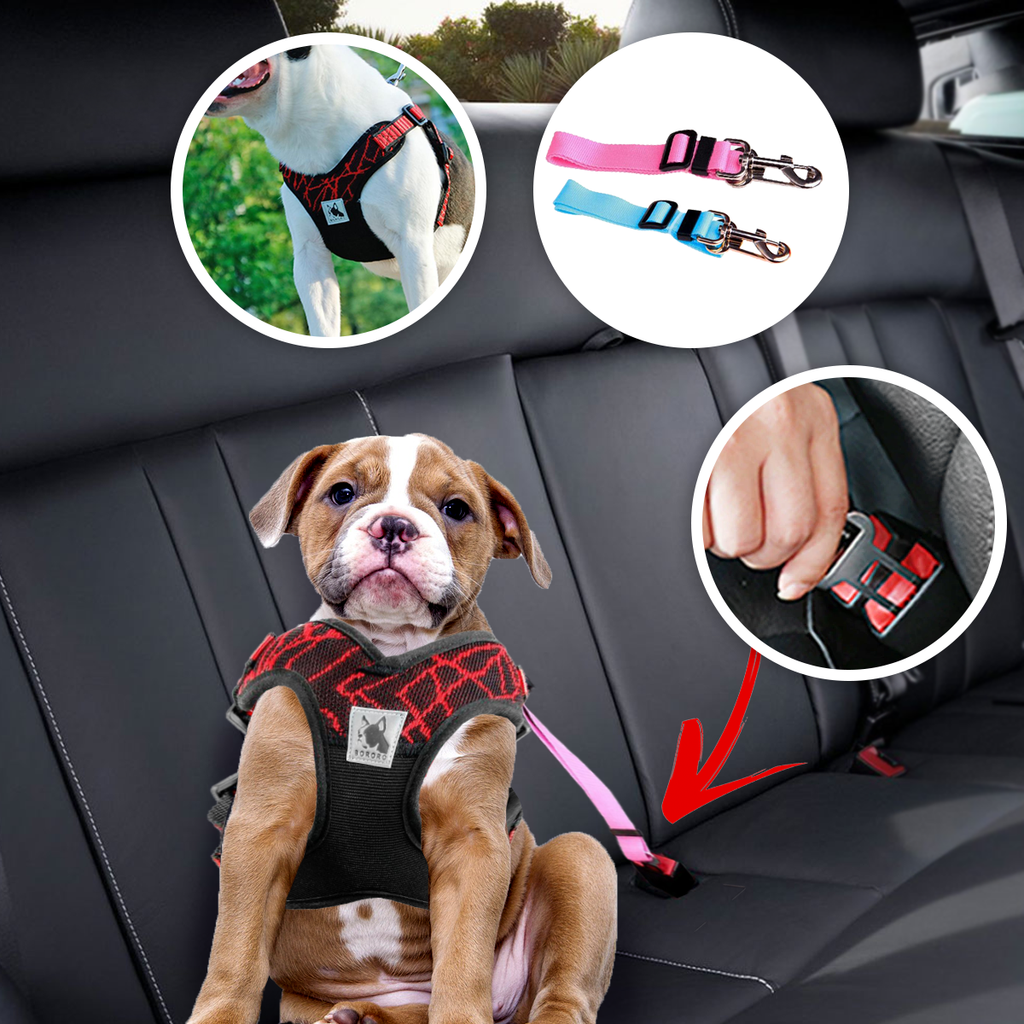 Dog Seatbelt & Safety Harness Combo