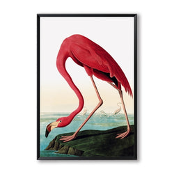 Modern Colorful Flamingo