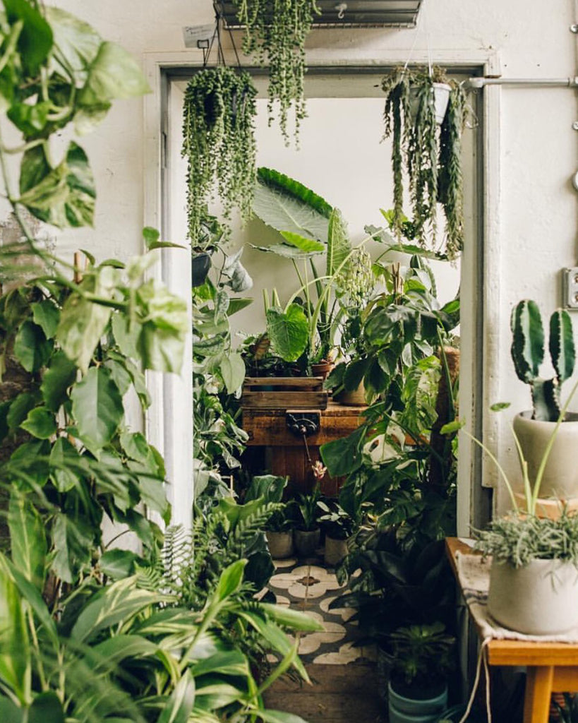 We're becoming crazy plant parents, and here's why you should join us