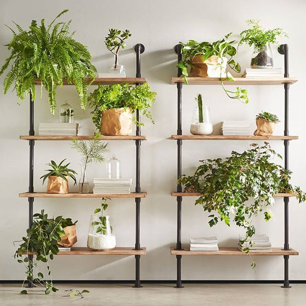 The Golden (or rather Green) Rules for Houseplant Care
