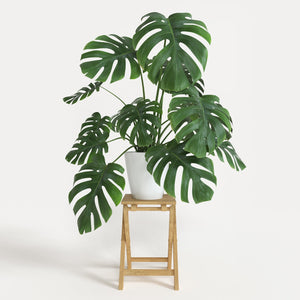 5 Most Popular Houseplants in 2018