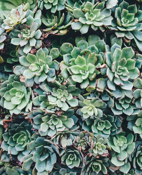 5 Near Indestructible Plants