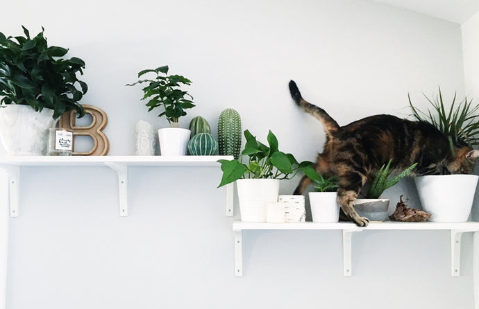 5 Pet Friendly Plants