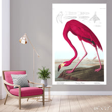 Load image into Gallery viewer, American Flamingo Colossal Art Print