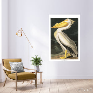 American White Pelican Colossal Art Print