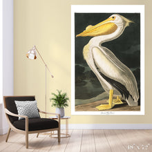 Load image into Gallery viewer, American White Pelican Colossal Art Print