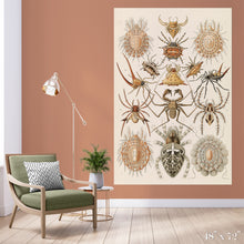 Load image into Gallery viewer, Arachnid Study Colossal Art Print