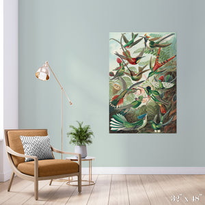 Bird Study Colossal Art Print