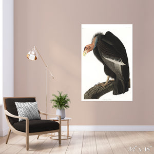 California Vulture Colossal Art Print