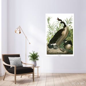 Canada Goose Colossal Art Print