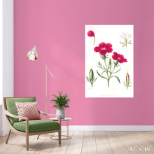 Load image into Gallery viewer, Dianthus Colossal Art Print