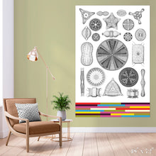 Load image into Gallery viewer, Diatoms Colossal Art Print