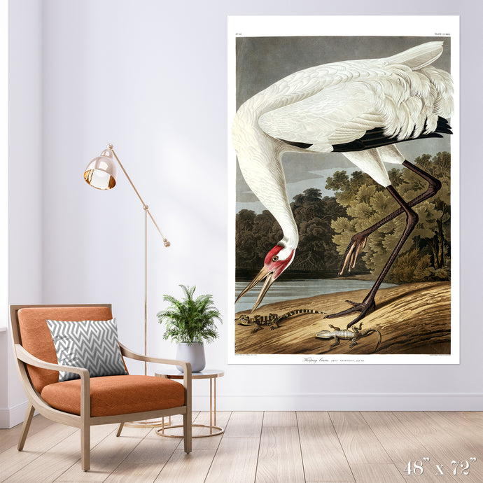 Hopping Crane Colossal Art Print