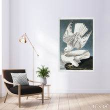 Load image into Gallery viewer, Iceland Falcons Colossal Art Print