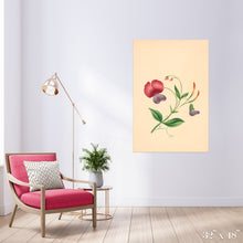 Load image into Gallery viewer, Lathyrus Colossal Art Print