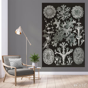 Lichen Colossal Art Print