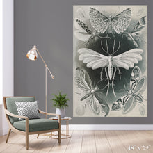 Load image into Gallery viewer, Moth Study Colossal Art Print