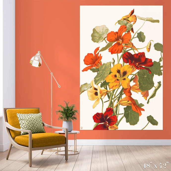 Nastutiums Colossal Art Print