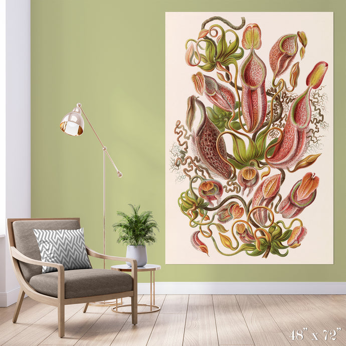 Pitcher Plant Study Colossal Art Print