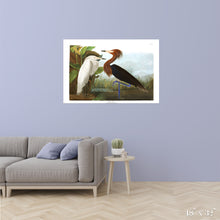 Load image into Gallery viewer, Purple Heron Colossal Art Print