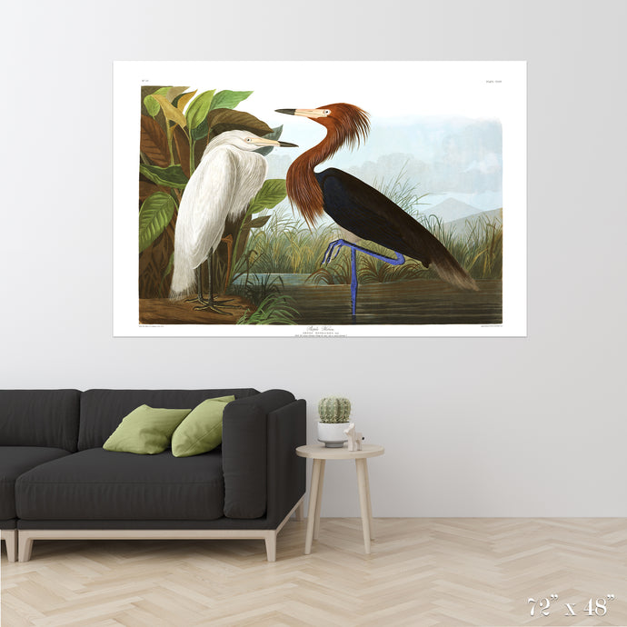 Purple Heron Colossal Art Print
