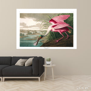 Roseate Spoonbill Colossal Art Print
