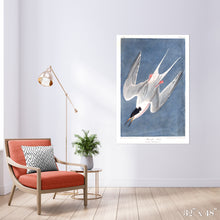 Load image into Gallery viewer, Roseate Tern Colossal Art Print