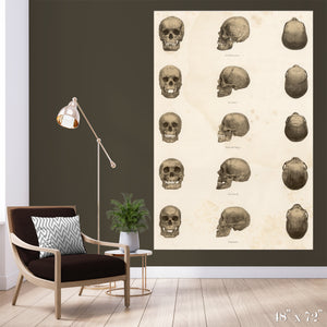 Skulls Colossal Art Print